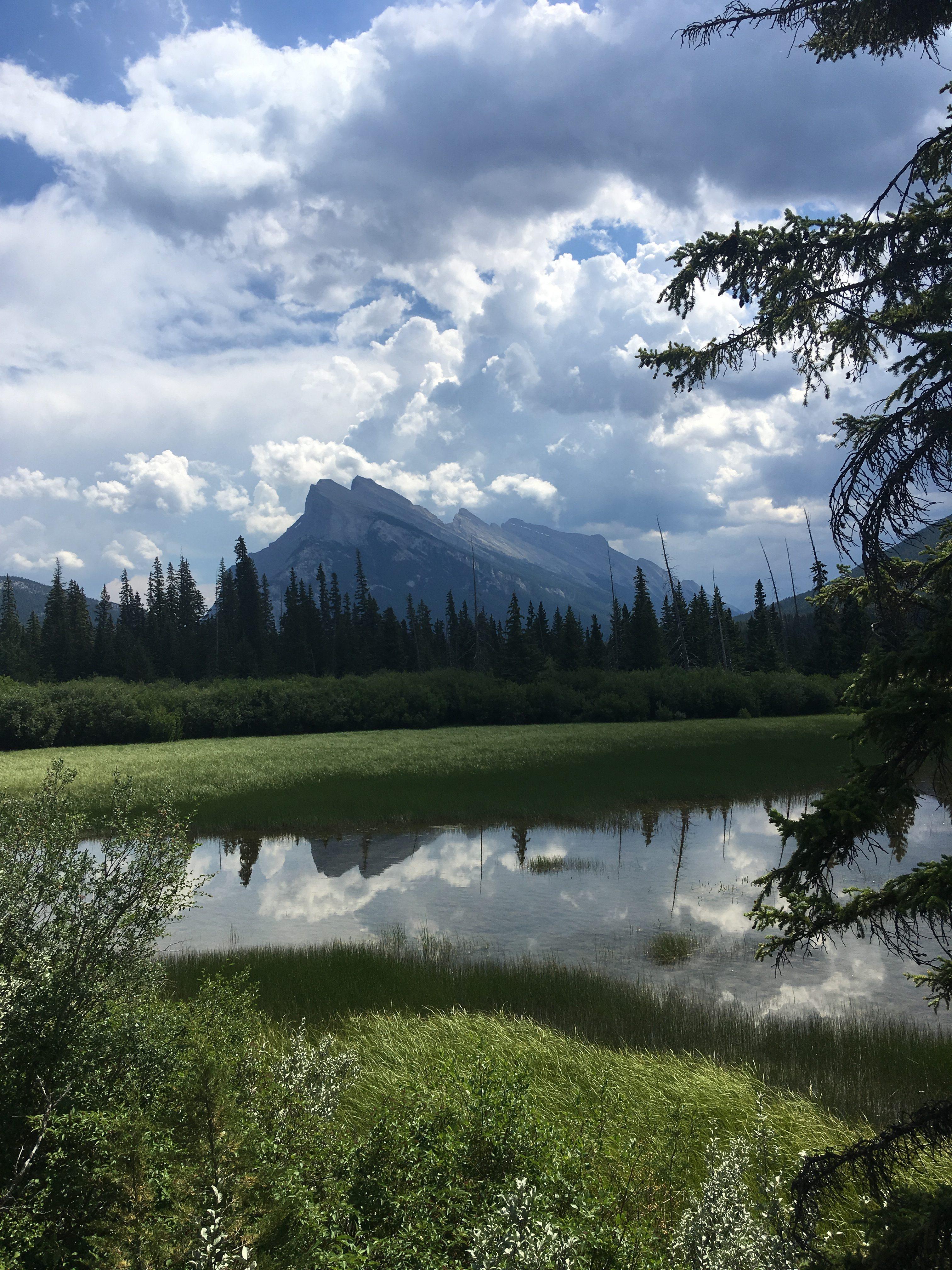 Eine Bergspitze Alaskas spiegelt sich in einer Lagune, die von hohem Gras und grünen Bäumen umgeben ist.